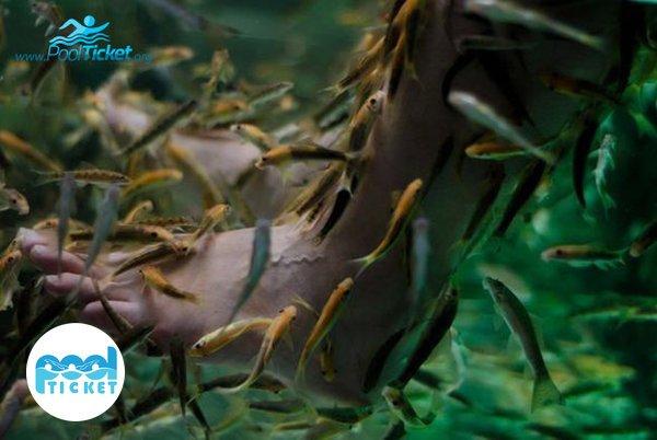 ماساژ ماهی استخر نشاط - خرید بلیط استخر نشاط مشهد